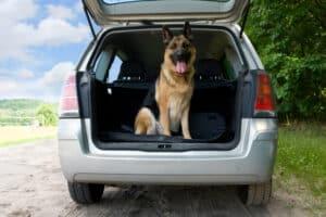 Wir zeigen Ihnen, welches Zubehör Sie für den Katzen- und Hundetransport im Auto verwenden können.